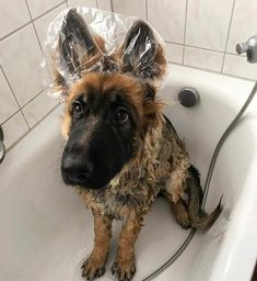 LOL, so cute.  That's actually a pretty good idea to keep those giant ears dry.