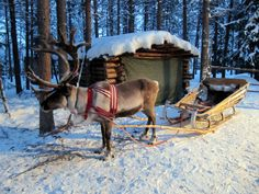 Reindeer sleigh ride Kuusamo Lapland by RukaKuusamo.com, via Flickr