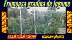 gradina de legume/vegetable garden