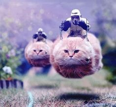 This is so random. Scout troopers on cat speeders.