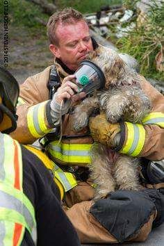 Firefighter Rescue Unresponsive dog from a Structure Fire in Largo, Florida Rescue Dogs, Animal Rescue, Shelter Dogs, Animal Shelter, Alexandre Le Grand, Dog Anxiety, Faith In Humanity Restored, Save Animals, All Gods Creatures