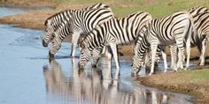 A look at the Eastern Cape's safari offering - South African Tourism Update Local Tour, Safari, Cape, Places To Go, Tourism, African, Travel, Mantle, Turismo