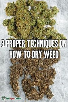 9 Proper Techniques on How to Dry Weed / Marijuana From RedEyesOnline.net