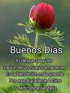 Good Night I Love You, Good Morning Good Night, Good Morning Quotes, Good Day, Morning Messages, Happy Thoughts, Thankful, Herbs, Inspiration