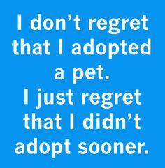 I don't regret that I adopted a pet. I just regret that I didn't adopt sooner.