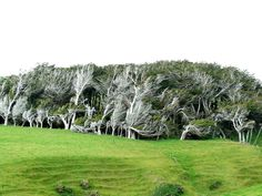 Extreme Antarctic Winds Shape Trees Into Beautiful Forms on Slope Point, New Zealand | Bored Panda