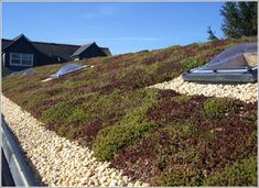 Great Green Roof. In more colours than just green.