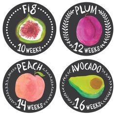Growing Garden Belly Stickers