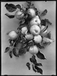 Richard Tepe, appels