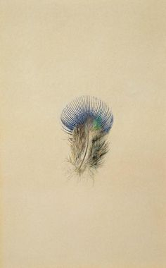 John Ruskin's study of a peacock feather, 1873.