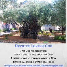 Charity Organizations, Romans 8, Do You Believe, See Photo, Gods Love, Bible Verses, Nature, Love Of God, Scripture Verses