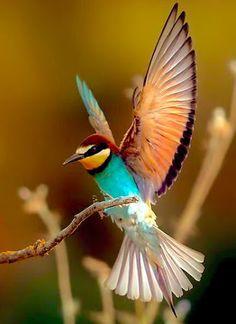 A Hummingbird - Arı kuşu (Bee-eater) - by Murat Acuner Pretty Birds, Love Birds, Beautiful Birds, Animals Beautiful, Cute Animals, Beautiful Pictures, Exotic Birds, Colorful Birds, Tropical Birds