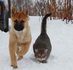 Russian cat and Russian dog are true friends, just look at them.