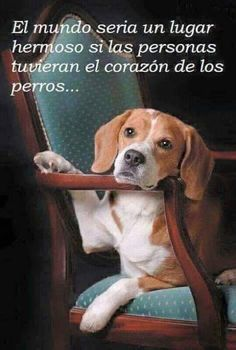 Interesting Beagle Friendly Loyal And Loving Ideas. Glorious Beagle Friendly Loyal And Loving Ideas. Cute Beagles, Cute Puppies, Cute Dogs, Dogs And Puppies, Doggies, Love My Dog, Puppy Love, Animals And Pets, Cute Animals