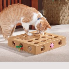 Great way to keep an indoor cat entertained during the work day!