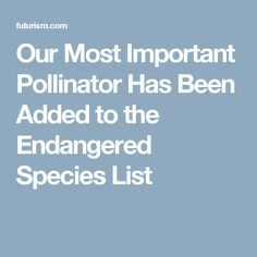 #etlobest #endangeredspecies  I found this to be an amazing article about the possible extinction of bees.  I would like to introduce this article to students prior their research on their endangered species research project and discuss what could potentially occur if bees are not protected from extinction.  I think that students will be able to relate to this topic because it is something that they see or have seen at some point in their lives.