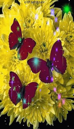 Imagenes Bonitas... - Amigosdeaquiydeallacompartiendo - Gabitos Butterfly Live, Madame Butterfly, Butterfly Pictures, Butterfly Kisses, Butterfly Wings, Roses Gif, Flowers Gif, Happy Birthday Colleague, Butterfly Illustration