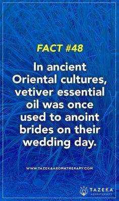 Fact No. 48 #TazekaFacts