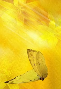 """My """"They Call Me Mellow Yellow"""" board Papillon Butterfly, Butterfly Flowers, Yellow Brick Road, Aesthetic Colors, Aesthetic Yellow, Yellow Submarine, Shades Of Yellow, Mellow Yellow, Color Yellow"""