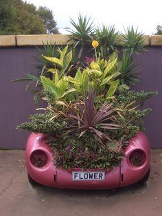 Thursday island garden - Google Search