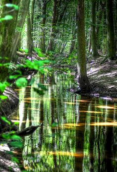 """Forest reflections"", Hierden, Holland by Ton le Jeune"