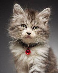 Beautiful Baby Animals Cats