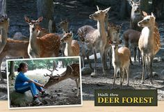 Southwick's Zoo - Deer Forest