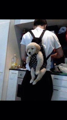 Baby carriers for dogs??! Smart, but, horrible idea for dogs.