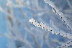 Fascinating ice crystals at Neshaugen Norway Winter, Ice Crystals, Frost, Cold, Pictures, Photography, Photos, Photograph, Photo Illustration