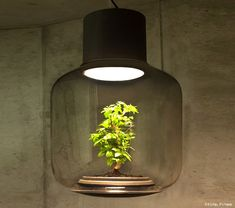 The Lamp Mygdal by Nui Studio is a functioning table or pendant lamp inside which is an autonomous ecosystem that allows plants to grow in windowless or dark environments.