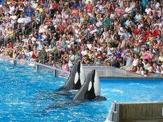 Loro parque tenerife, killer whale show