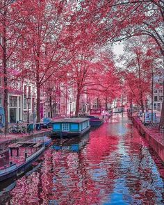 Amsterdam in the spring....beautiful