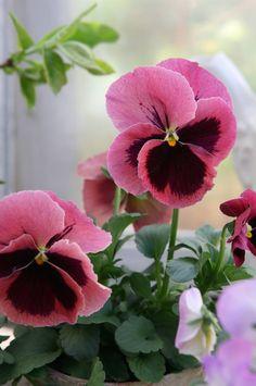 Cores, Flores e Linhas