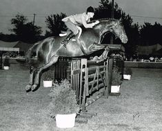 """Looking Back on the Hunter Division - George Morris critiquing top riders of the past.  Rodney Jenkins was a """"wunderkind"""" from the very beginning. Here he is in the relatively easly stages of his professional career (1965). Rodney's leg position improved dramatically over the years. But what you can applaud is his incredibly soft arm and hand. There is no question that Rodney never let a horse """"take over"""" with him; he bitted horses right......read more 
