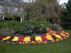 Seasonal landscape display: fall/autumn design with pumpkins and mums