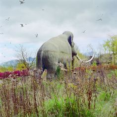 Simen Johan- had to pin this!