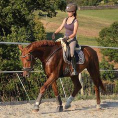Das Wetter heute war so traumhaft 😍 Endlich mal wieder Sonne ☀ Ich bin Fratelino das zweiten Mal ohne Hilfe von unten geritten 💪 Es wird immer besser 😊 Mit Penny habe ich etwas an der Doppellonge gearbeitet 😊 #dressage #dressur #pferd #horse #cheval #paard #horseriding #equestrian #gamaschen #schabracke #dressurpferd #youngster #younghorse #eskadron #uvexequestrian #wallach #fuchs #reitenmitherz #4yo #hvpolo