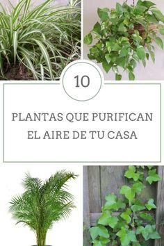 El aire de nuestros hogares y oficinas se encuentra cada vez más contaminado. Por ello, os proponemos una lista de plantas capaces de purificar el aire.
