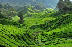 Maleisie - Cameron Highlands