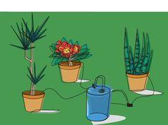 ¿Qué hacer con el riego de las plantas durante las vacaciones?