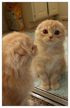 Cute Cartoon Animals Dragon, Draw So Cute Animals To Draw my Cute Cat And Dog Pi… - Cutest Baby Animals Cute Cats And Dogs, Cool Cats, Cats And Kittens, Orange Kittens, Ragdoll Cats, Cute Cartoon Animals, Cute Animals, Flat Faced Cat, Scottish Fold Kittens