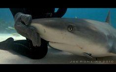 Акулите обичат тази жена