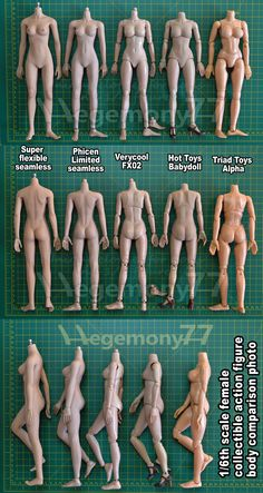 1/6th scale female collectible action figure body size and skin color tone comparison Super flexible seamless with stainless steel skeleton - mid bust, tan skin tone PLMB2014-S02 Phicen Limited seamless Verycool FX02 medium bust flesh caucasian Hot Toys Babydoll Triad Toys Alpha with centimeters and inches (cm and inch)