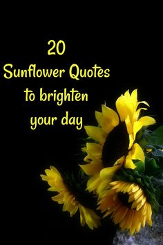 20 Sunflower Quotes to Brighten Your Day Sunflower Quotes, Sunflower Pictures, Sunflower Seeds, Beautiful Flower Quotes, Beautiful Flowers, Happy Flowers, Summer Quotes, Beach Quotes, Sunflower Wallpaper