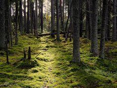 Vaskijärvi nature park, Finland