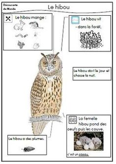 The owl - Daniel Messer N Animals, Nocturnal Animals, Animals For Kids, Preschool Themes, Preschool Science, French For Beginners, Animal Worksheets, French Education, Animal Habitats