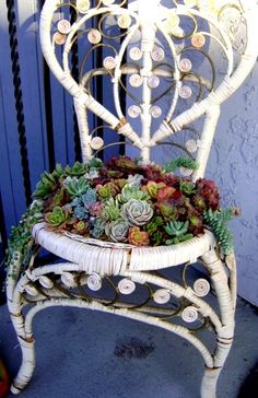 Succulent Chair by chicweed on Etsy. So unbelievably pretty. Should do this with that NZ sponge plant Succulent Arrangements, Cacti And Succulents, Planting Succulents, Succulent Gardening, Container Gardening, Chair Planter, Pot Jardin, Cactus, Diy Planters