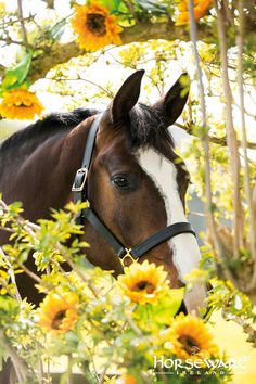 Beautiful horse peeking out from behind yellow flowers. Pretty picture, great horse photography. Please also visit http://www.JustForYouPropheticArt.com and https://www.facebook.com/Propheticartjustforyou for more colorful Art paintings and prints. Thank you so much! Blessings!