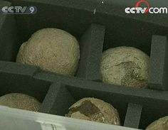 """The National Geological Museum (Beijing) receives """"Black Market"""" Fossils from Australia"""