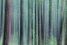Ethereal Forest by Alene Davis